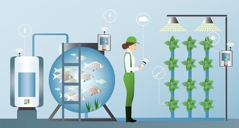 Jak funguje aquaponie?